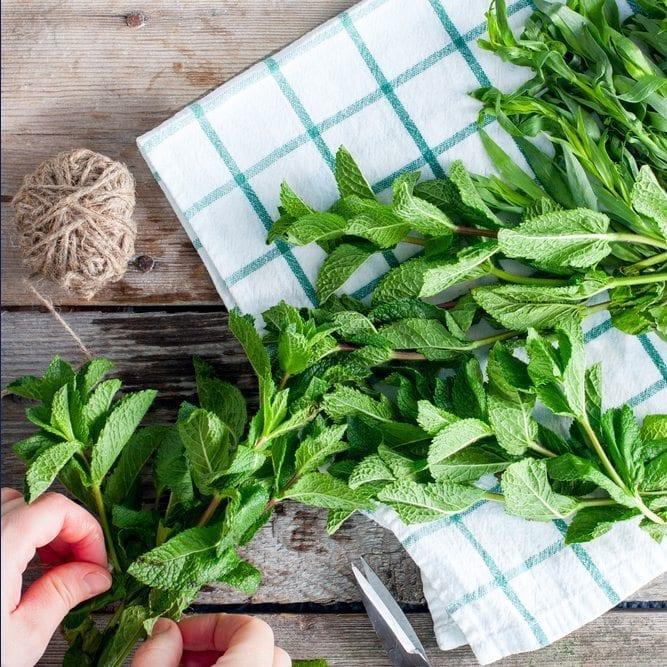 herb good food recipe ideas herb hack eat healthy